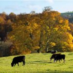 MANAGING WOODLAND AT CONFOR SHOW