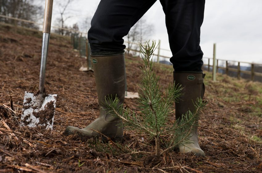 SCOTLAND LEADS THE WAY IN TREE PLANTING