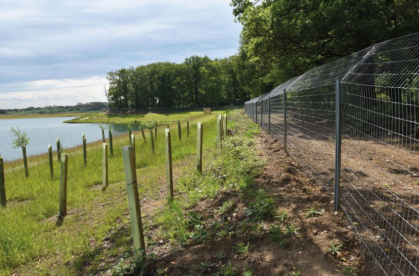 HAMPTON WORKS WITH EMBRYO TO TRANSFORM A SIX-LAKE SITE AT NORTON DISNEY