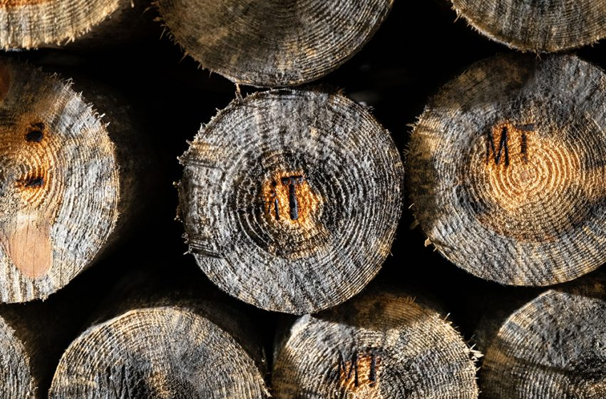 JUST TO BE CLEAR, WE KNOW WHAT WE ARE TALKING ABOUT AT WJ TIMBER TREATMENT