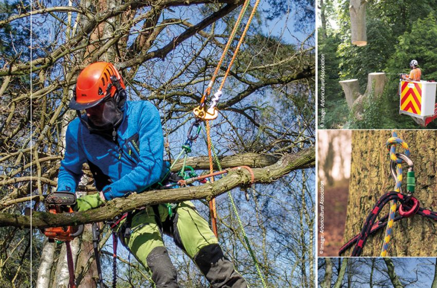 INDUSTRY CODE OF PRACTICE FOR ARBORICULTURE GETS UPDATED
