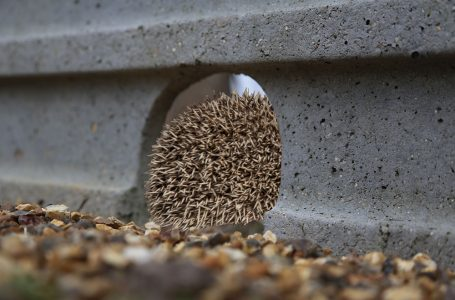 PROTECT THE HEDGEHOG POPULATION WITH SUPREME CONCRETE