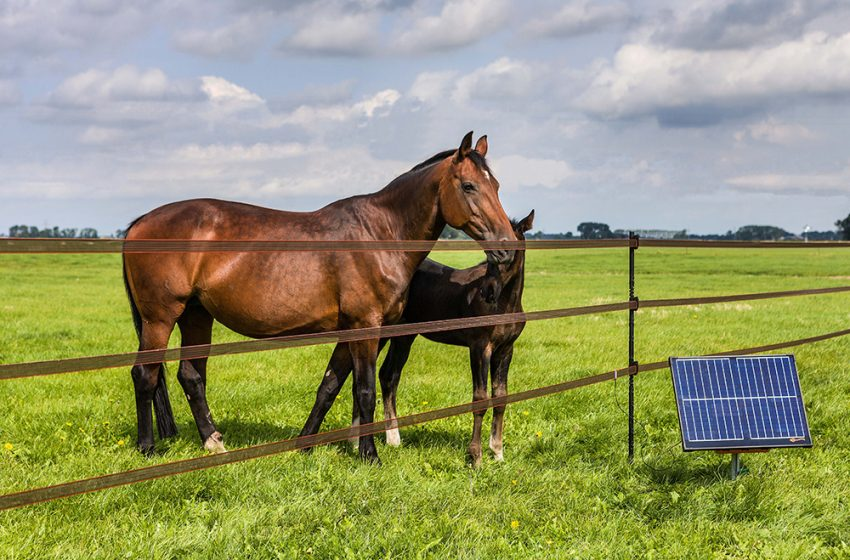 BUILDING AN EFFECTIVE ELECTRIC FENCE FOR HORSES